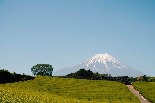Monte Fuji - Vista dalla piantagione di tè di Imamiya