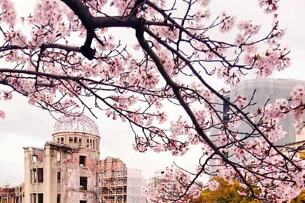 Hanami Sakura Ciliegi Hiroshima Parco della Pace