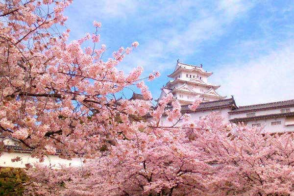 Aomori Castello Hirosaki Hanami Fioritura ciliegi