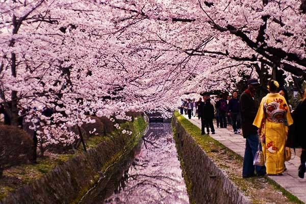 Passeggiata del filosofo Kyoto Hanami