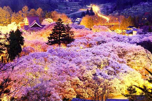 Fioritura Hanami Nagano Castello Takato