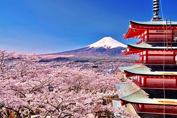 Sakura Hanami Pagoda Chureito